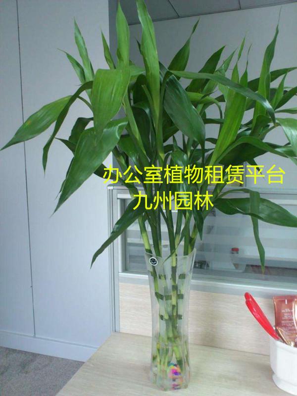 细节植物素描图步骤